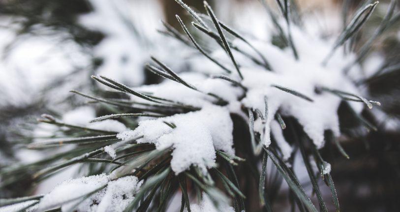 Schnee auf Tannenzweigen. Weihnachtsgrüße sind ein gutes Beispiel für Anlässe, bei denen wörtliche Übersetzungen nicht zielführend sind.