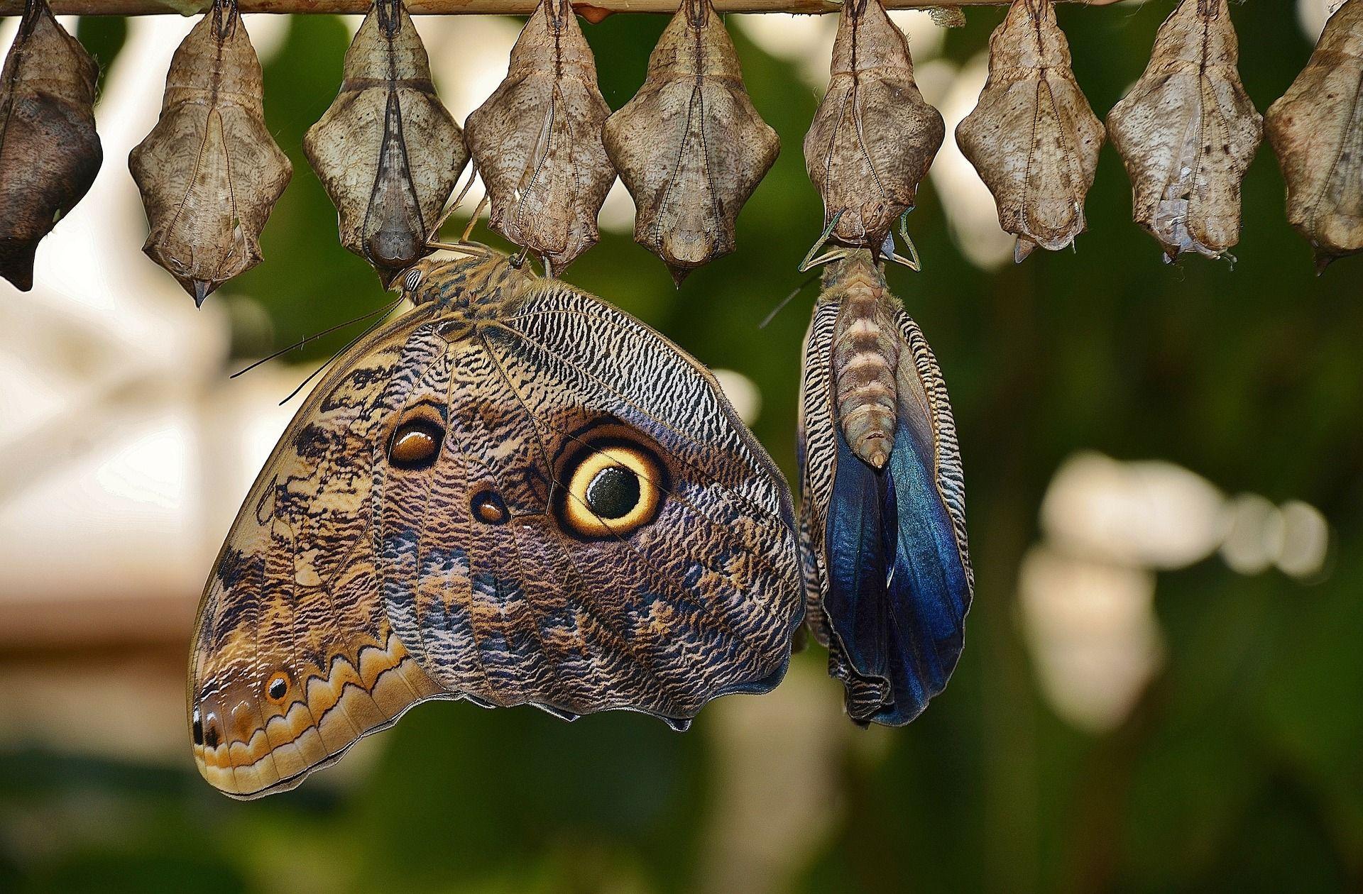 Sind neue Sprachformen im Wesen Schmetterlinge oder fresssen sie wie Raupen an der Substanz einer Sprache?