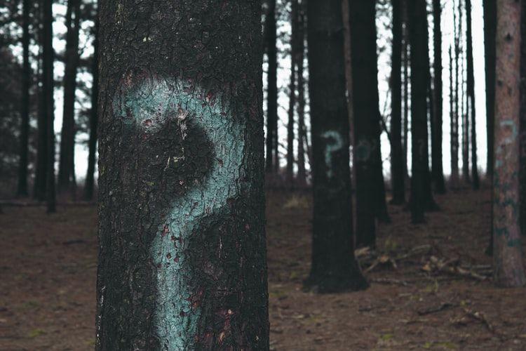 Ein Wald mit Fragezeichen auf Bäumen. Symbolisiert die vielen Fragen, die Übersetzer*innen stellen können.