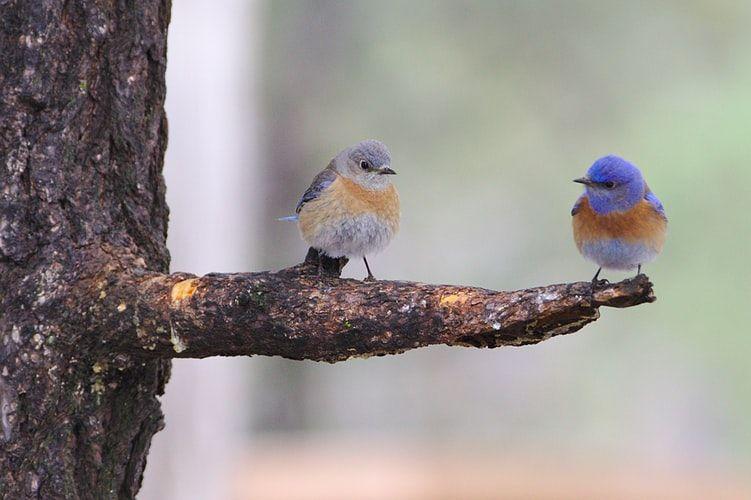 2 Vögel auf einem Ast als Symbol der Zusammenarbeit zwischen Übersetzer und Lektor